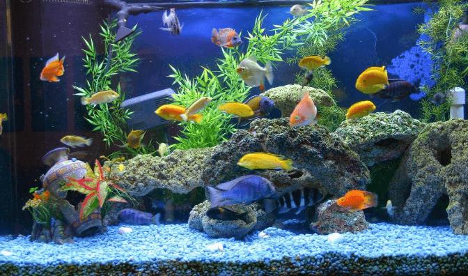 ósmosis inversa acuarios